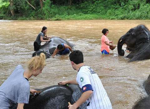 ELI volunteers bathing the elephants