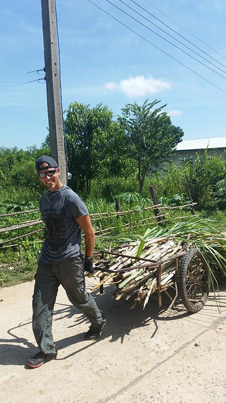 A volunteer helping to haul sugar cane in Thailand.