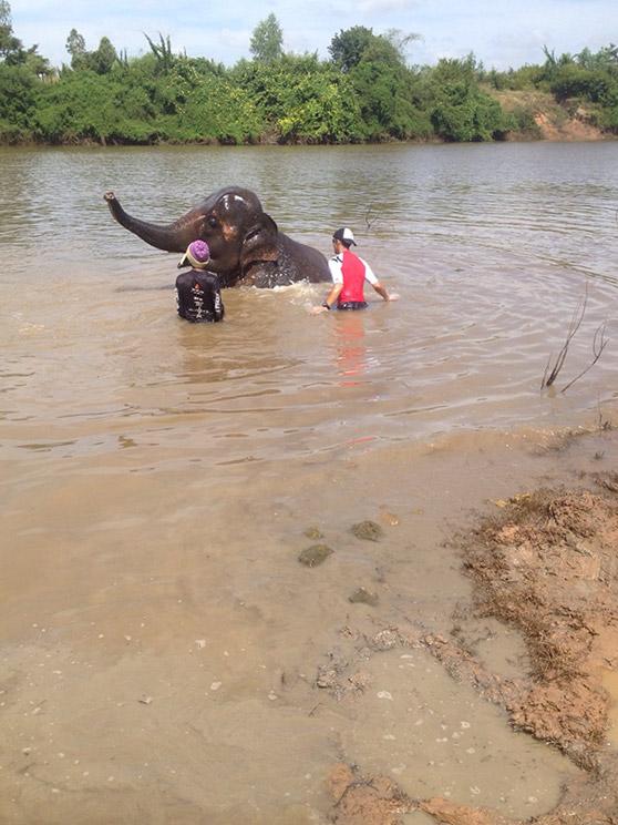 Volunteers bathing an elephant in Thailand.