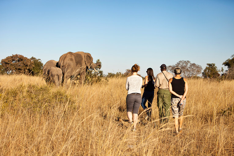 Tourists in the wilds of Africa