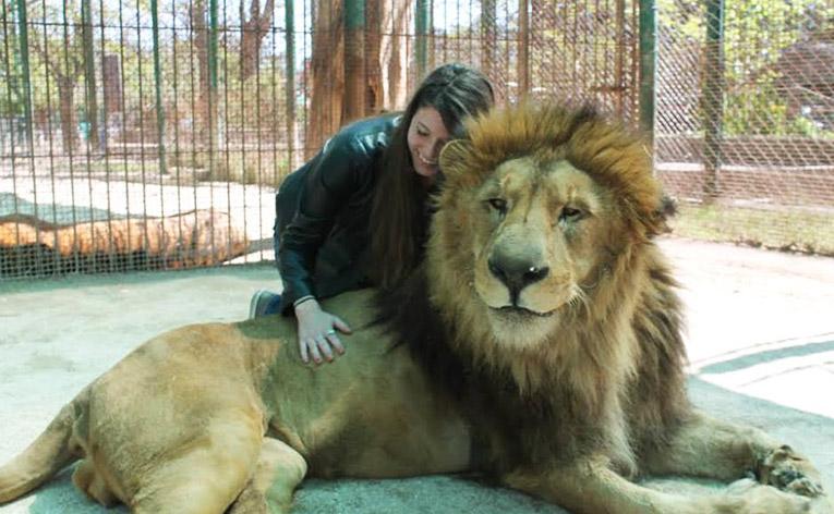 Hugging a Lion