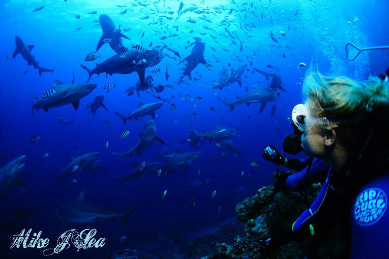 Diving with bull sharks on Shark Reef Marine Reserve in Fiji