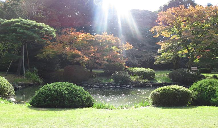 Shinjuku Gyoen National Park, Tokyo, Japan