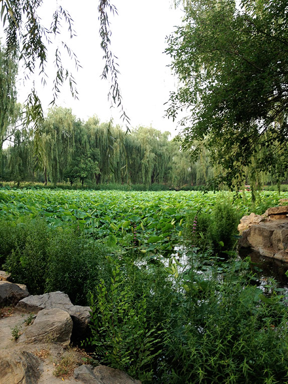 Pond at the Old Summer Palace in Beijing, China
