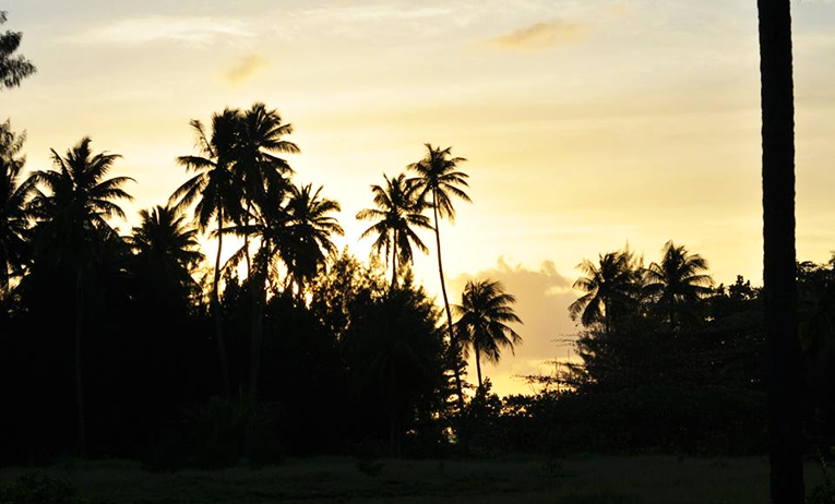Silhouette of palm trees in Seychelles