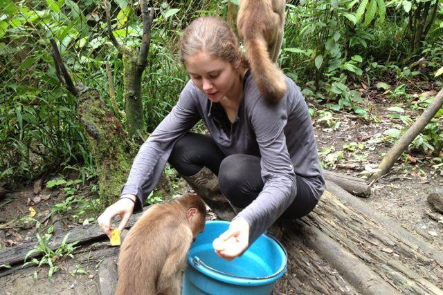 Volunteering in Ecuador with monkeys