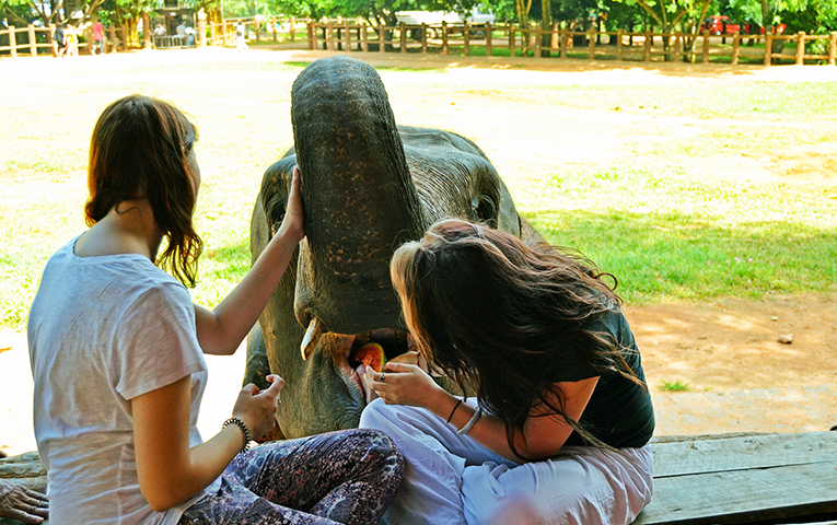 Volunteers feed an elephant in Sri Lanka