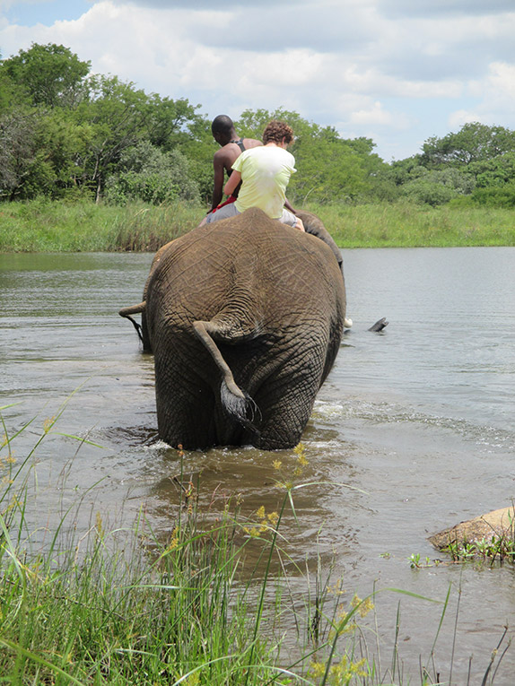 Elephant riding through a river in Zimbabwe