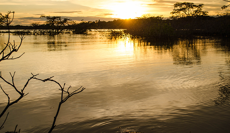 A caiman at sunset in the Amazon Rainforest