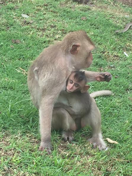 Long-tailed Macaques in Lopburi, Thailand