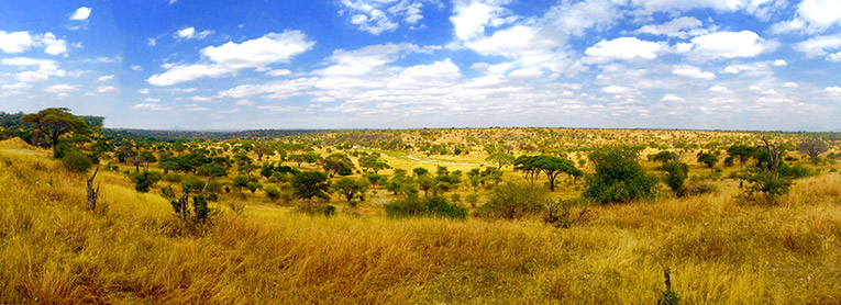 Panorama of Tarangeti National Park in Tanzania