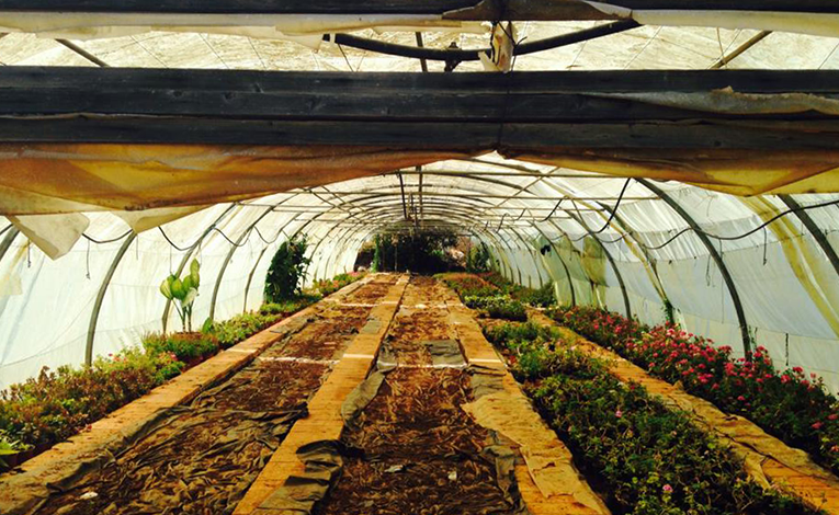 Greenhouse in Jounieh, Lebanon