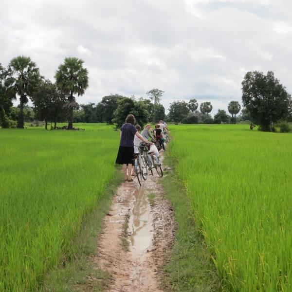 Volunteers ride bicycles though rice fields