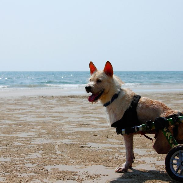 Sprite in his wheelchair looking out over the Ocean