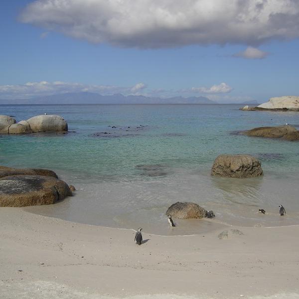 Pinguines beach