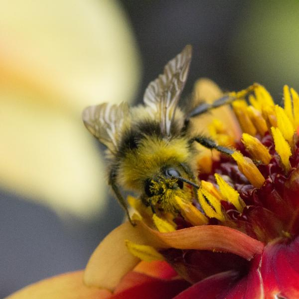 Bee photography on summer course at Nottingham Trent University