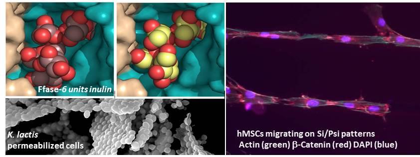 molecularbiosciences