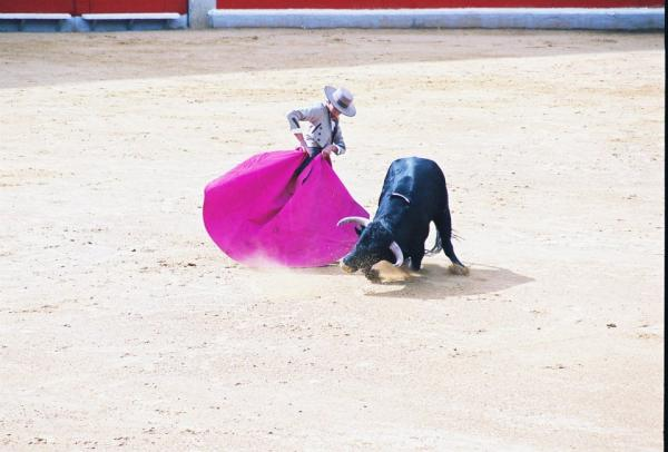 bull fighting spain spanish culture