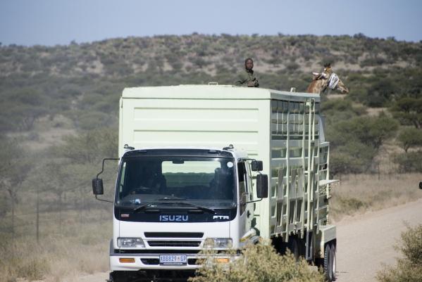 Wildlife Relocation