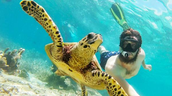a man swimming with a turtle