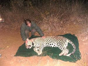 Collaring the leopard