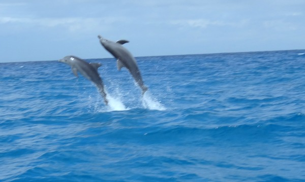 Dolphin and Marine Conservation