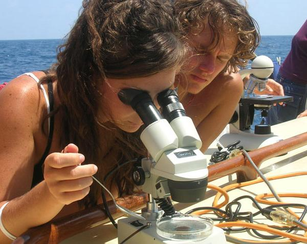 Seamester, study abroad at sea, Marine Science
