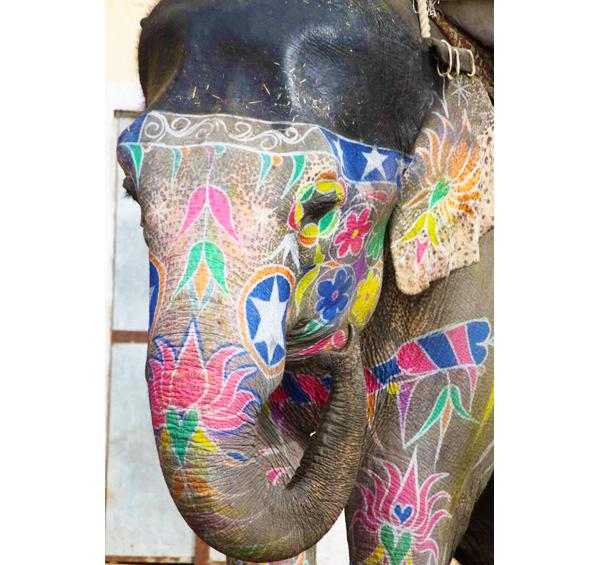 Work with elephants in India!