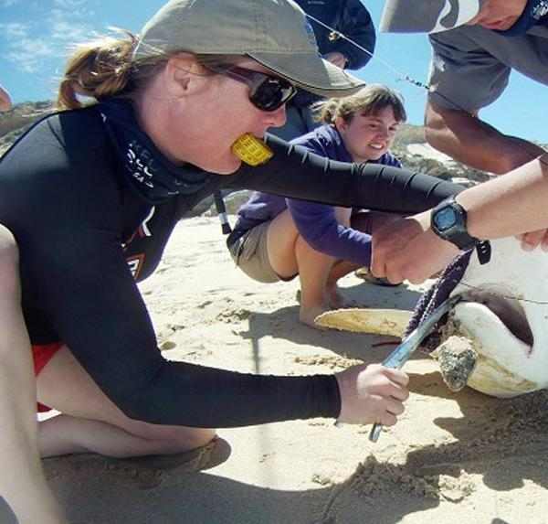 A volunteer tagging a fish on the shore