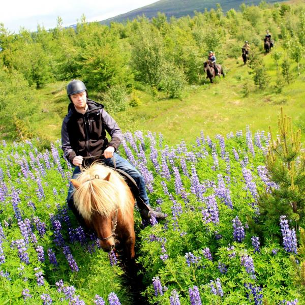 horseback riding in summercamp in Iceland