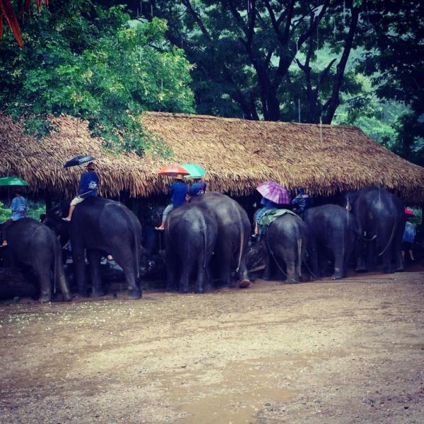 Elephant Camp Project in Thailand with Love Volunteers!
