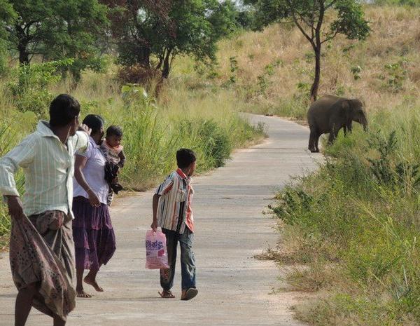 Human-Elephant conflict resolution program