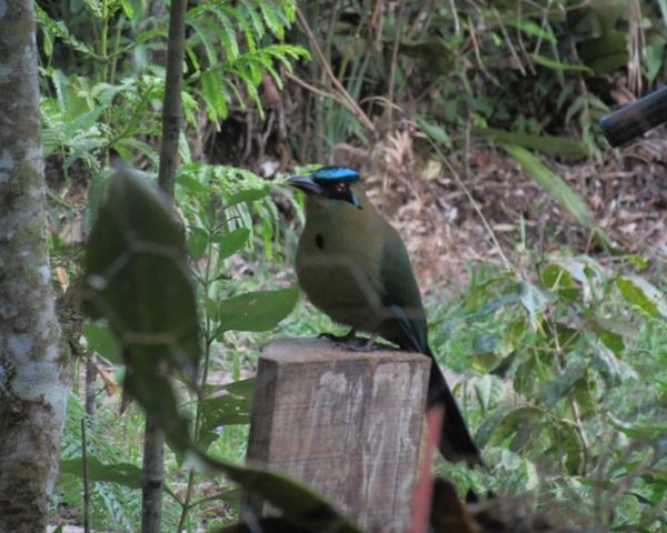 Birds ecology