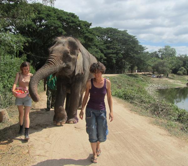 u18 Elephant Care and Wildlife Rescue