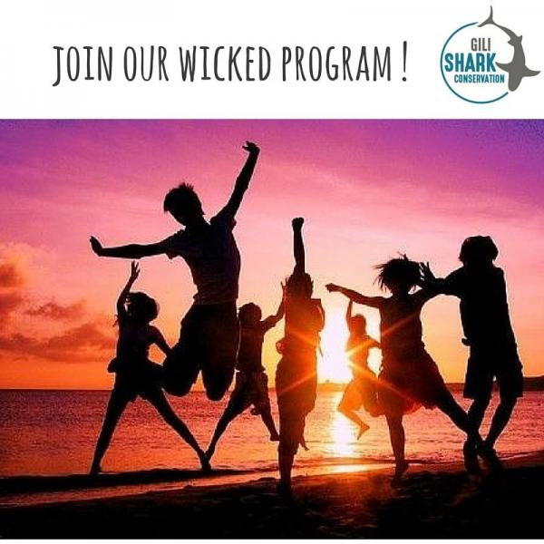 join our awesome program in gili air, Gili Shark Conservation Project
