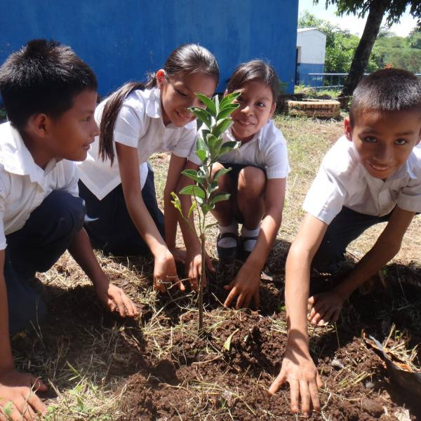 Planting their first mango trees in their schoolyard