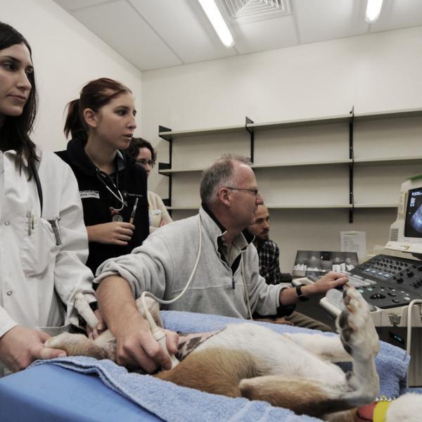 Dating veterinær