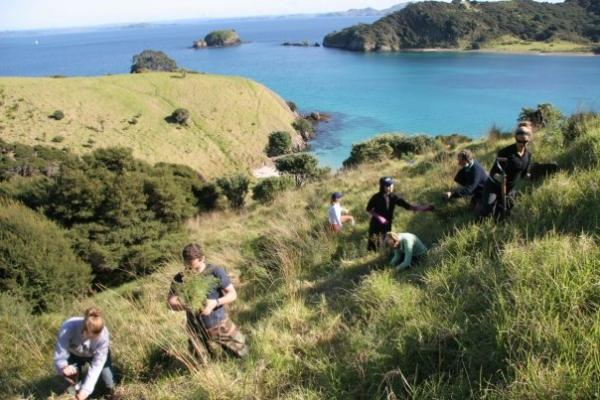 tree planting on New Zealand volunteer conservation program
