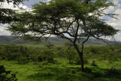 Kenyan bush scenery, Projects Abroad