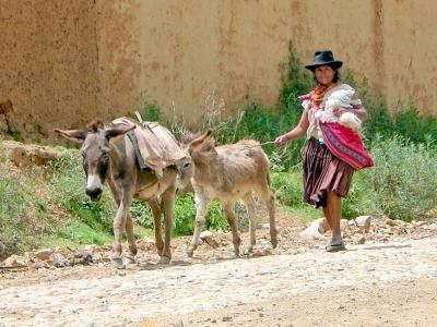 Local woman with animals in Bolivia