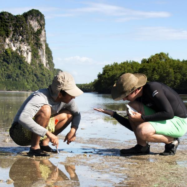 Oceans Course at the Mudflats of the Andaman Sea