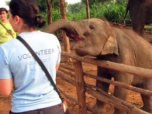 Care for Elephants in Thailand | Travellersworldwide.com
