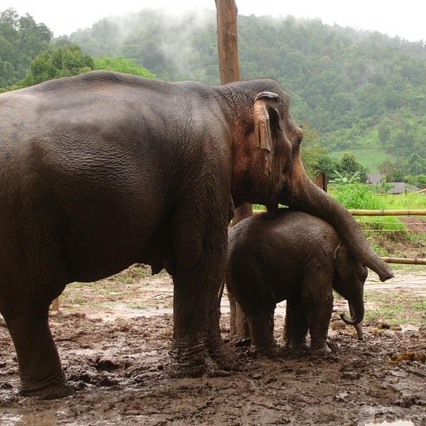 GVI thailand