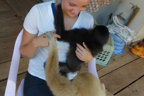 volunteer with gibbons