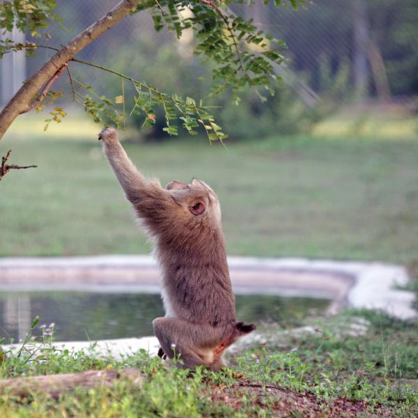 Thailand Wildlife Rescue