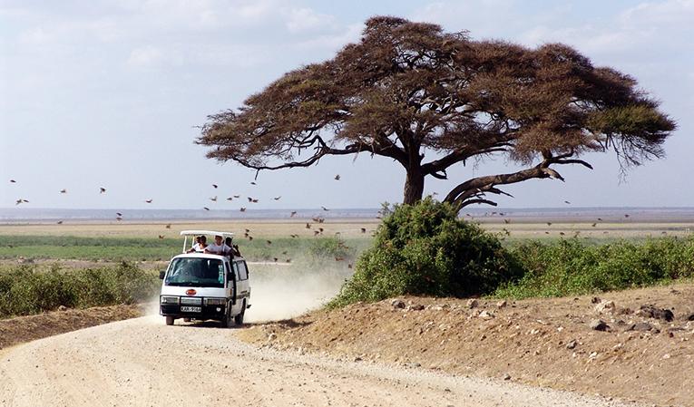 Safari tours in Kenya