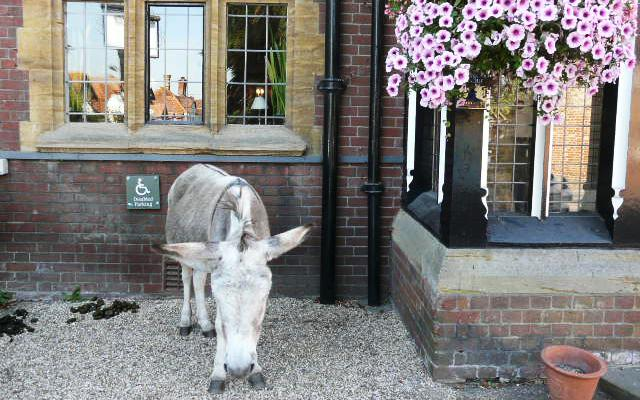 Not an uncommon sight in a quaint English village - a donkey on the front porch.