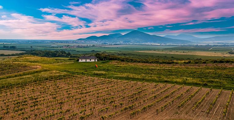 vineyard in Eastern Europe