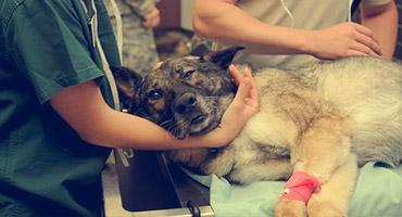 A sick dog being treated in a vet clinic