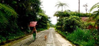 Take long walks through lush green Ecuadorian pathways.